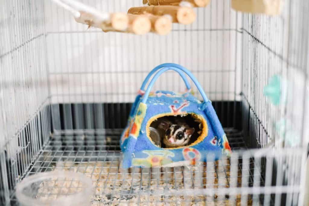 cage pouch. Sugar glider